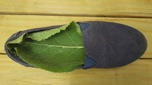 The Leaf People Should Place In Their Shoes - You'll also find out the plant that boosts your energy and relieves foot pain when you wear it inside your shoes.