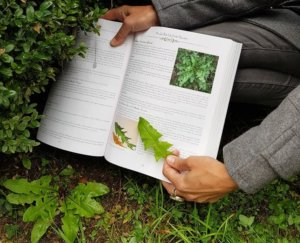 The second index of the book makes it easy to search by your specific problems, ailments or needs. These are just some of the reasons why this book is a near perfect guide for both beginners, seasoned herbalists or even people with no plant experience at all.
